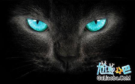 纯黑猫进家有什么预兆,要做些什么?!猫主动来家中会有好运还是厄运?!
